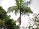 Tucano, visitante habitual