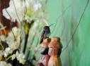 Beija Flor na Sala Fazenda Florença